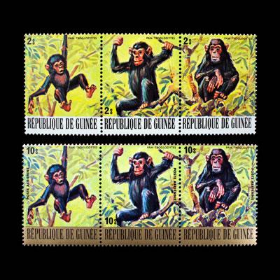 1977 Guinea Chimpanzee Regular and Air Post Stamp Strips