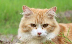 Katzenkastrationsaktion