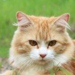 Katzenkastrationsaktion vom 18.10. – 13.11.2021
