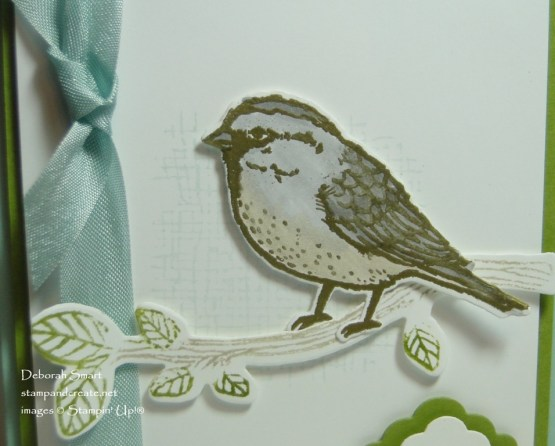 Best Birds for Spring