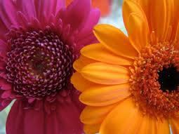 Llegaron las flores y las Florez