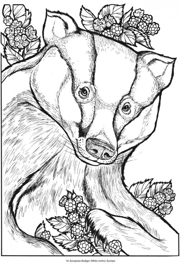 If You Love Animals And Nature Or If Youu0027re A Harry Potter Fan And Are In  Hufflepuff House Then Show Your House Pride With This Fun Badger Coloring  Page ...