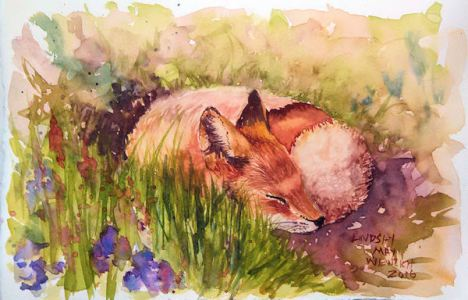 Technique: Learn to Draw and Water Color a Fox
