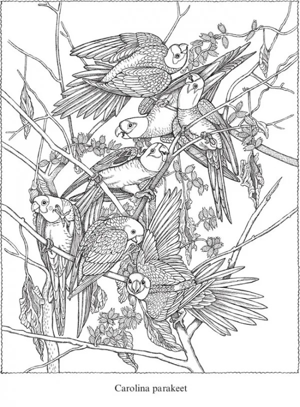 Dover Coloring Pages Publications Free Sample Picture Ideas ... | 813x600
