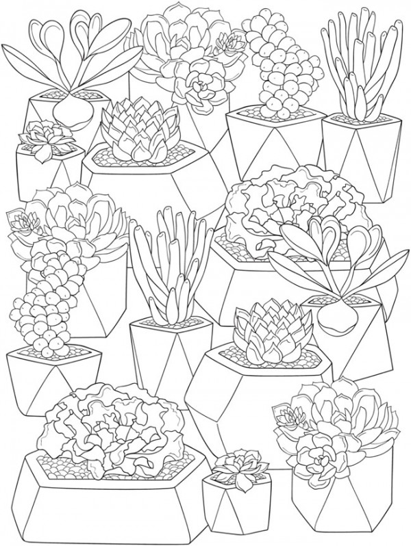 6 Succulents Coloring Pages