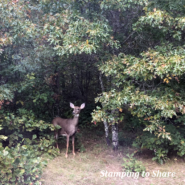 A deer visiting me while I happened to be stamping with the Stampin' Up! Dashing Deer Set! Picture by Kay Kalthoff #stampingtoshare