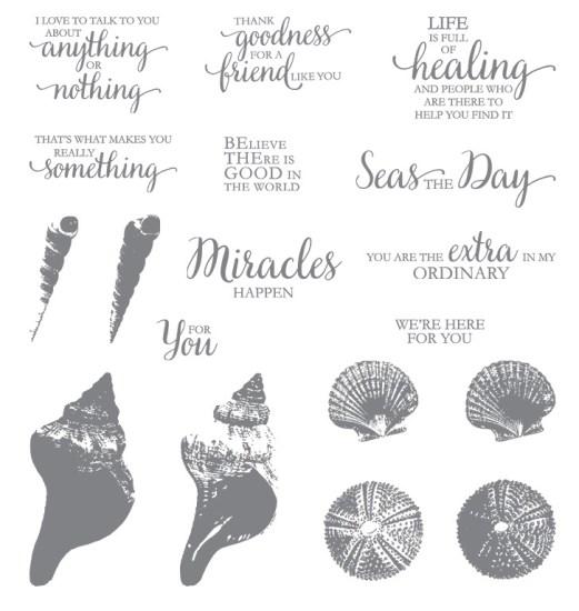 SU So Many Shells