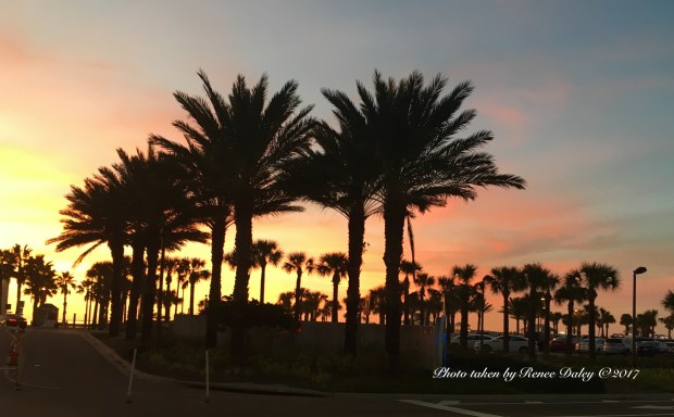 Clearwater Florida Photo by Renee Daley