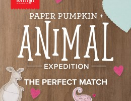 Paper Pumpkin + Animal Expedition