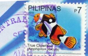 true clownfish