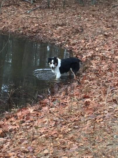 finn-in-the-pond