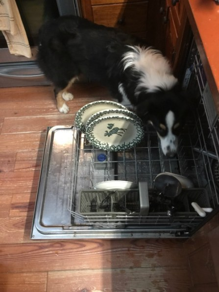 finn-helping-load-the-dishwasher