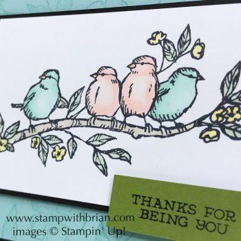 Bird Ballad, Stampin' Up!, Brian King, 2019 Annual Catalog Sneak Peek