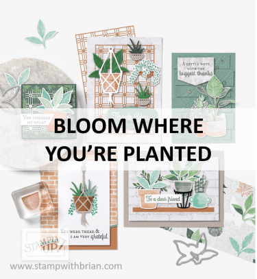 Bloom Where You're Planted Suite, Stampin Up! 2021 Annual Catalog