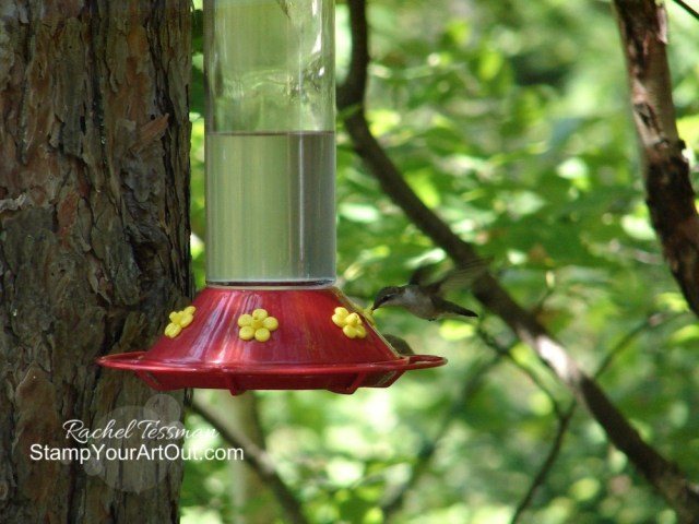Hummingbird at Caribou Lake 2019! #stampyourartout #stampinup - Stampin' Up!® - Stamp Your Art Out! www.stampyourartout.com