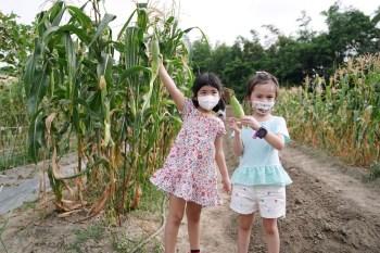 苗栗西湖四季豐收食農之旅 綠景複合農園 農人體驗現採現煮玉米超好吃
