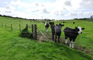 Stand - Campaigning to save the area north of Dorchester – Food production