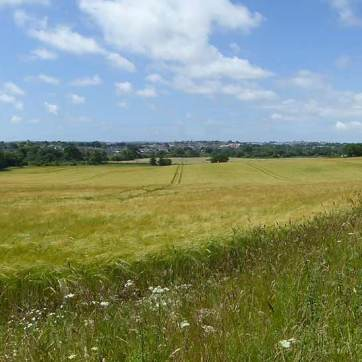 Stand - Campaigning to save the area north of Dorchester – South of Frome Whitfield Lane, between the B3143 (Piddle Valley Rd) and the A35.