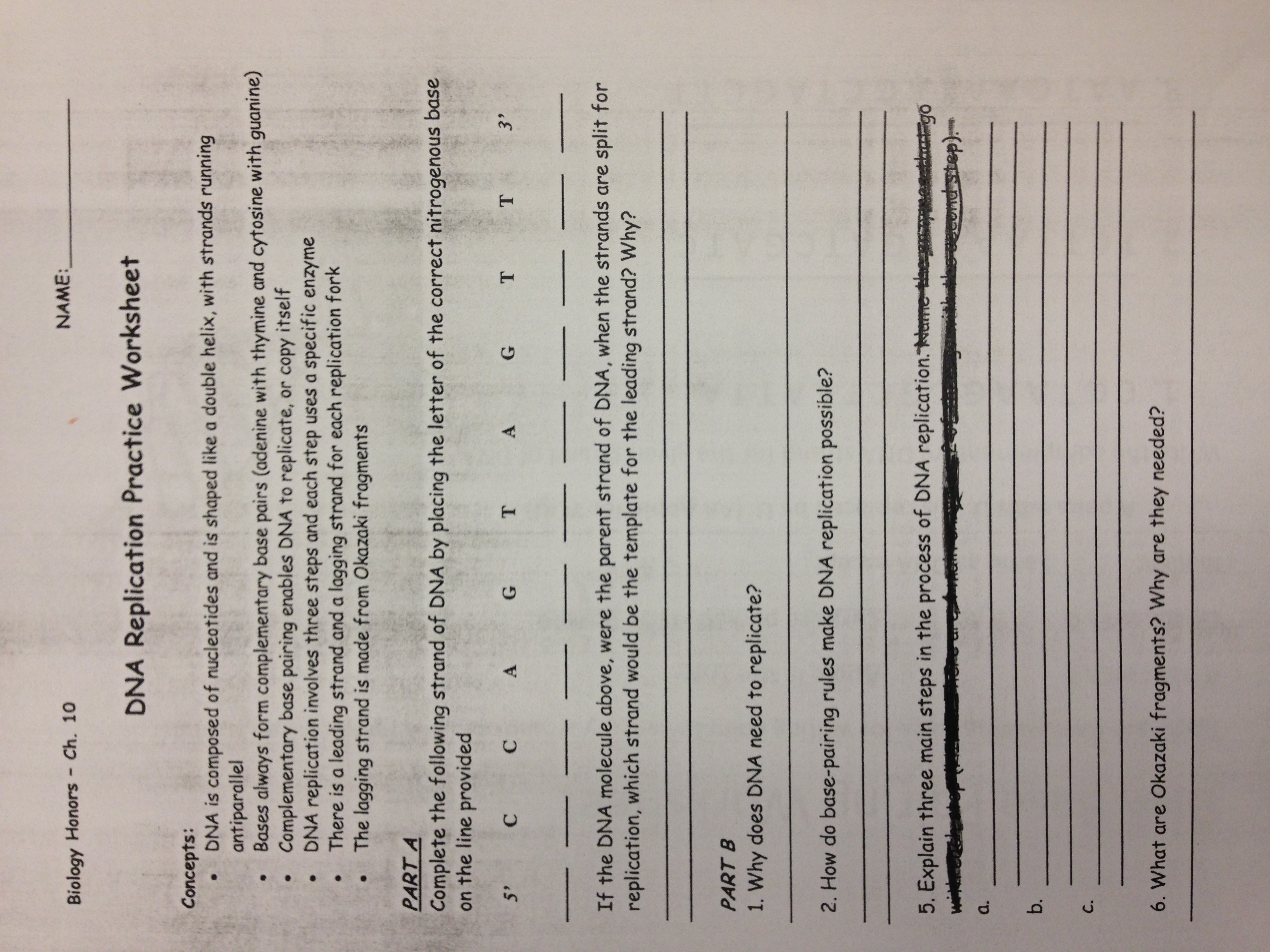 29 Rna And Protein Synthesis Gizmo Worksheet Answers