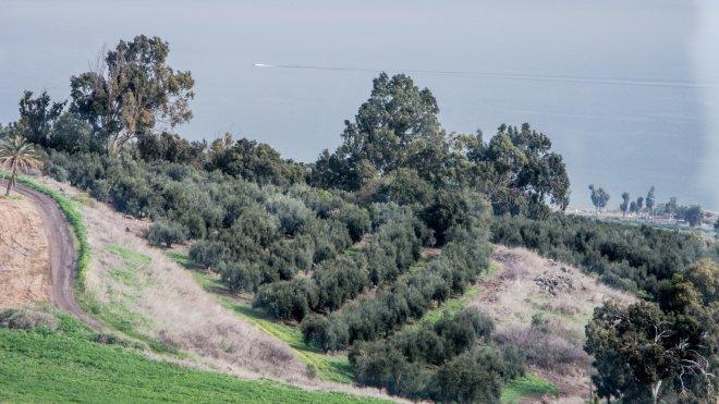 Terraced land near the first Kibbutz in Israel