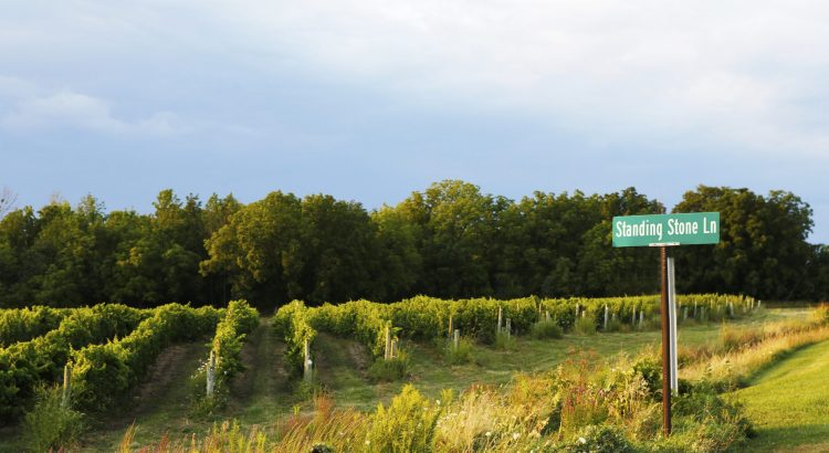 Photo of vineyards and road sign for Standing Stone Lane