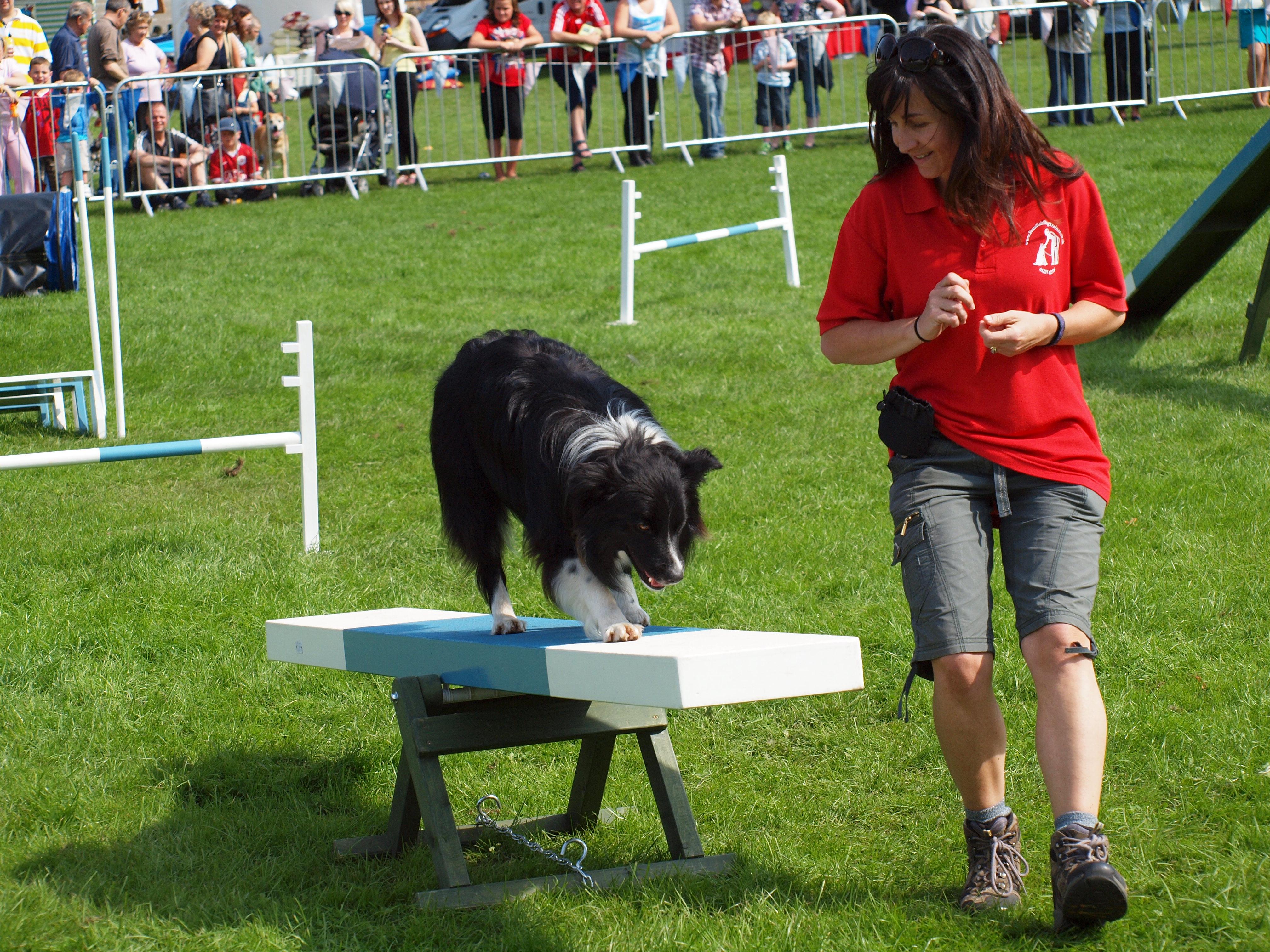 Dog Agility Standish Dog Trainer