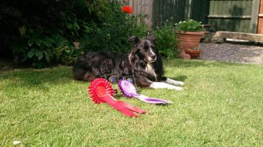 Indie wins out of Grade 1 Agility