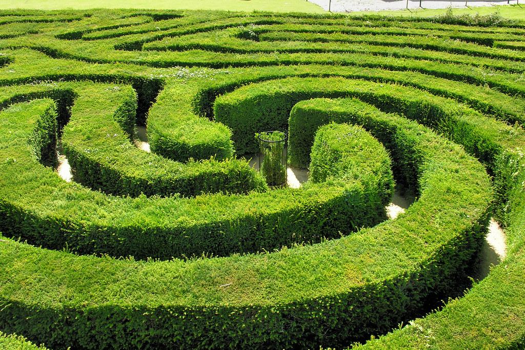 a lush, green, spiraling hedge maze