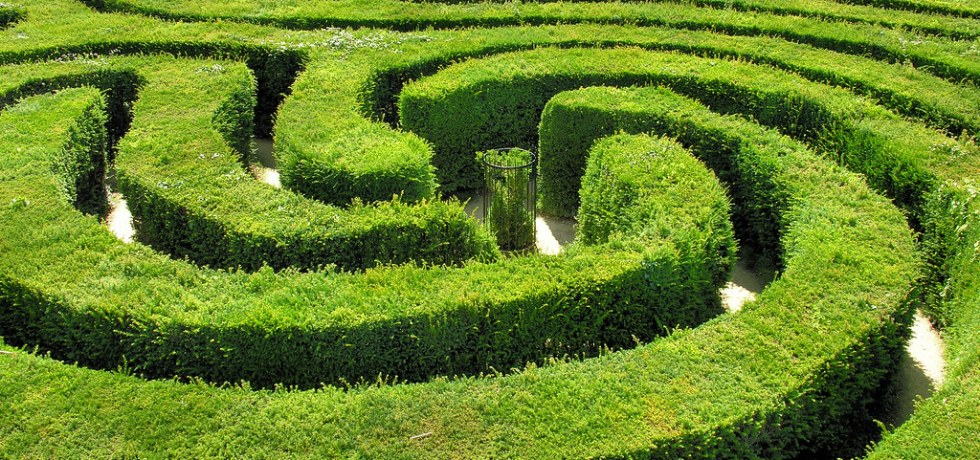 a lush, green, spiraling hedge maze