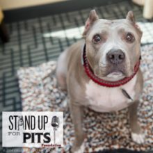 TODAY we Stand Up For Pits in PORTLAND!!!
