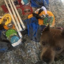 SUFP CREATES AND DONATES DOG IN HOT CAR KITS