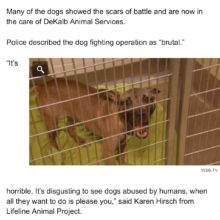 AND… ANOTHER DOGFIGHTING RING BUST