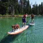 Kids playing with dogs on a paddleboard