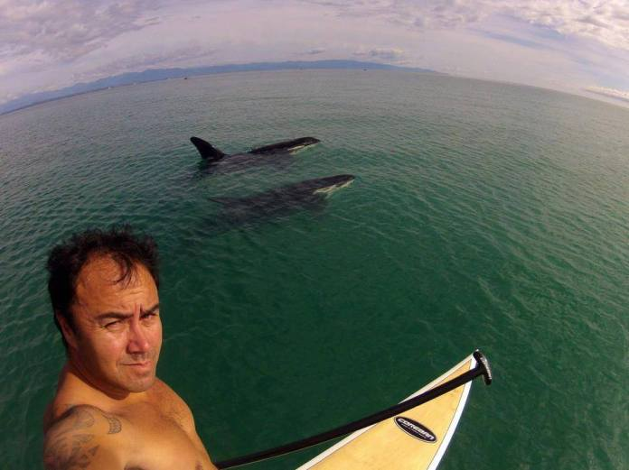 standup paddling with orcas