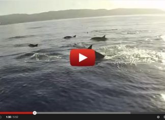 Dream Sup Session- Sea Lions, Dolphins and Whales Oh My!