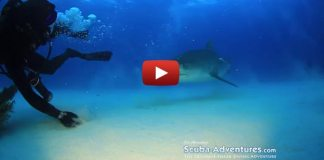 Everyone Scared Of Sharks Needs To Watch