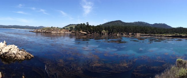 Kelp Beds and Clean Water by Brent Allen Outside