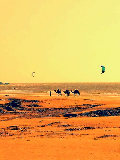 Kites and Camels in North Africa.