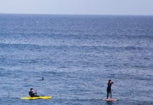 Ogunquit Maine shark surf sup 2