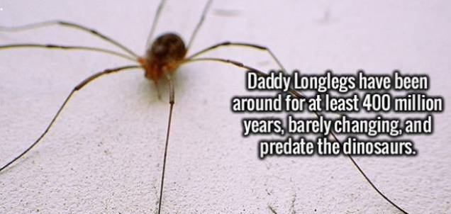 a_few_cool_and_interesting_facts_to_excite_your_brain_640_15