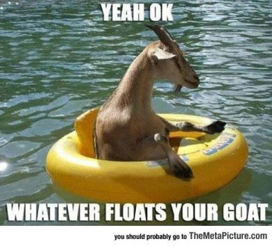 cool-goat-water-swimming