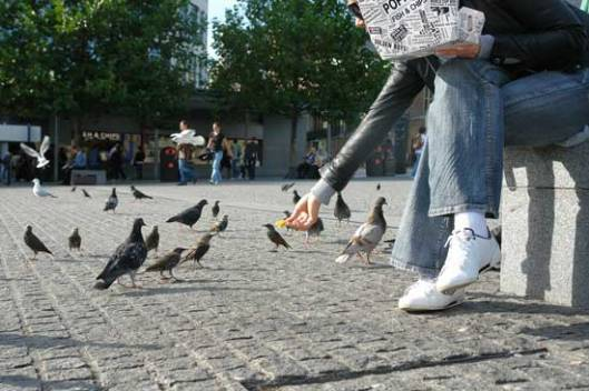 "Храни голубове - ""нахрани"" и смедеревски буџет"