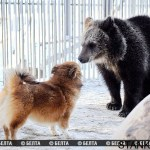 Собака – друг... медведя!