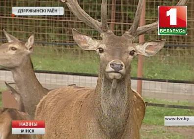 """В """"Станьково"""" в этом году появится парк диких животных"""
