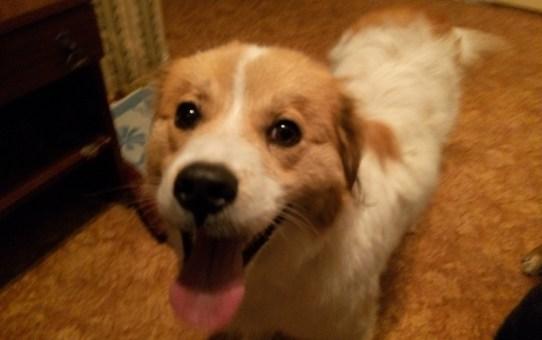 В Станьково найдена собака-мальчик. Помогите найти хозяина!