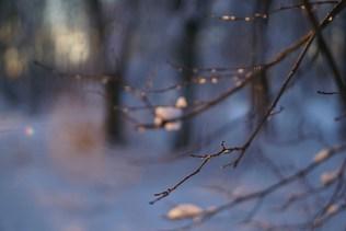 Остров Радости. Рождество в Станьково 2017. Фото Павла Карася.