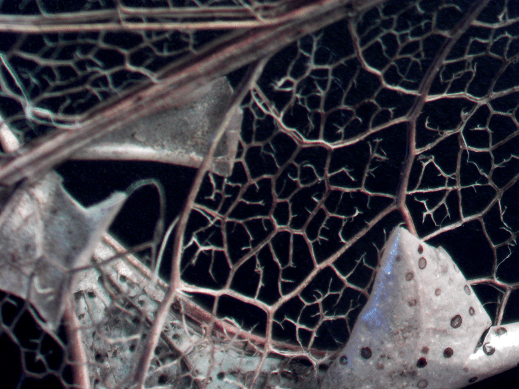 leaf LOW RES