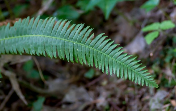 A fern frond droops over