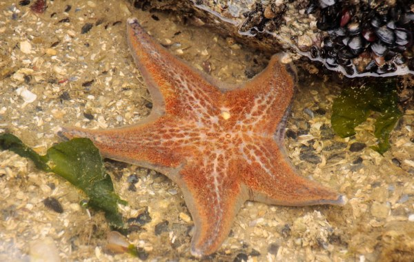 A sea star sits in shallow water