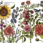Botanist's Journal (24″x33″)
